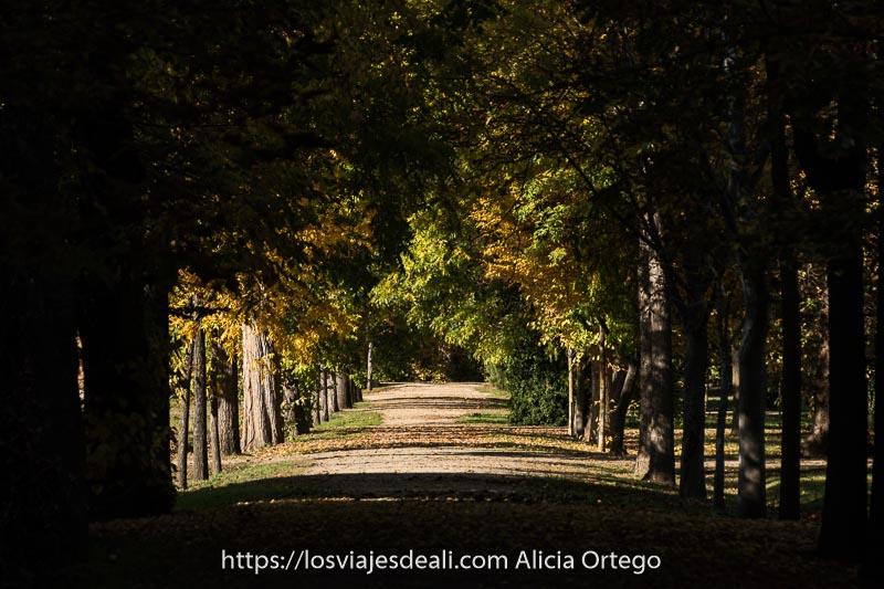 paseo en sombra con árboles de color verde y amarillo y sus sombras cruzando el suelo en horizontal