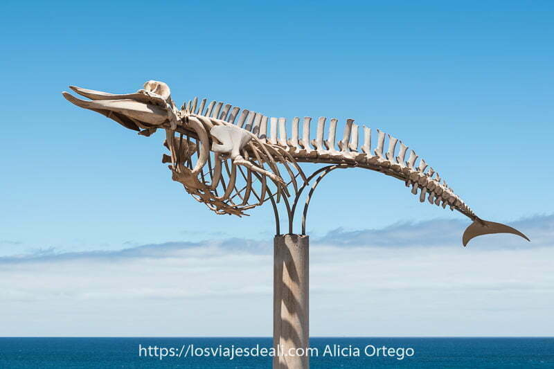 esqueleto de ballena con el mar detrás