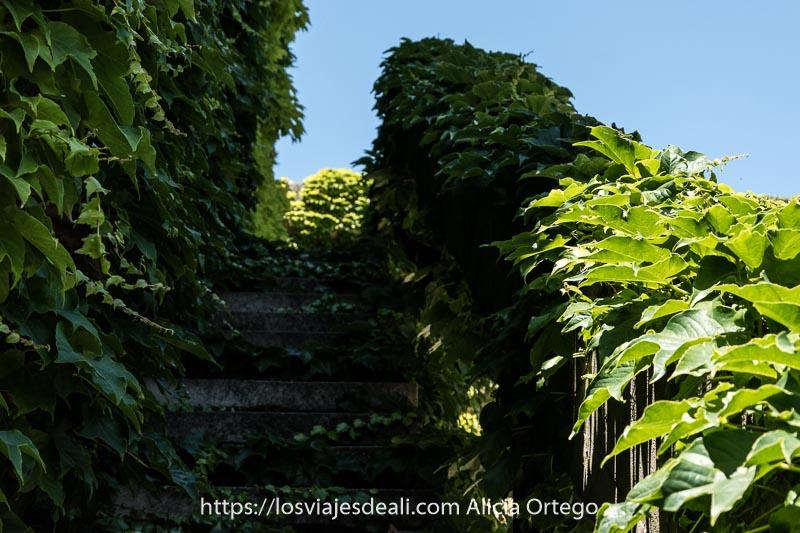 escaleras de piedra cubiertas de hiedra verde que suben hacia el cielo azul