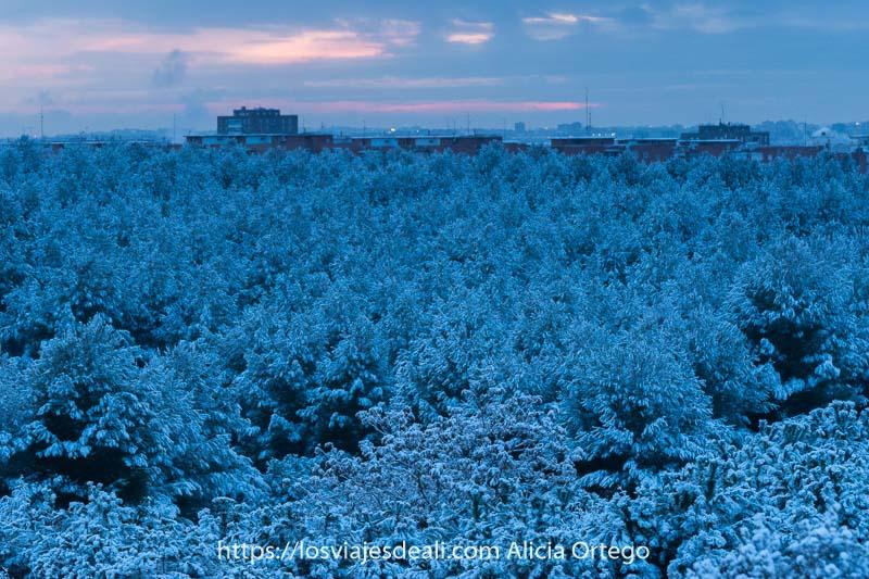 paisaje de copas de árboles llenas de nieve en madrid al atardecer