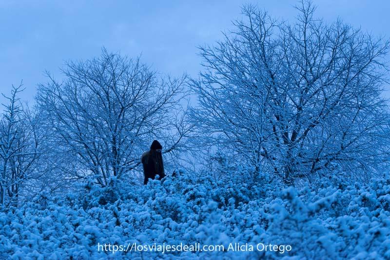 una chica vestida de negro paseando entre árboles llenos de nieve en la hora azul