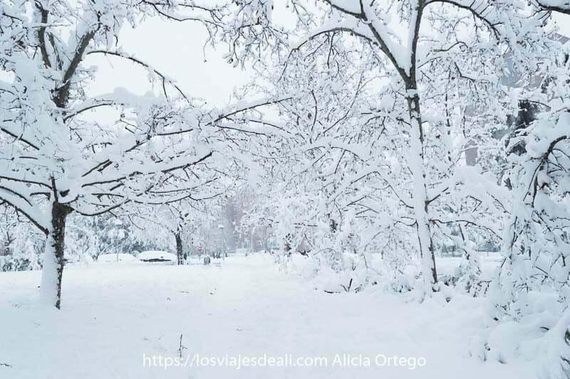 paisaje totalmente blanco en el parque el día de más nieve en madrid