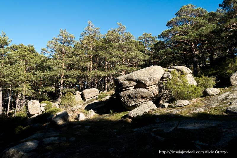 bloques de piedra de granito entre grandes pinos en el puerto de canencia