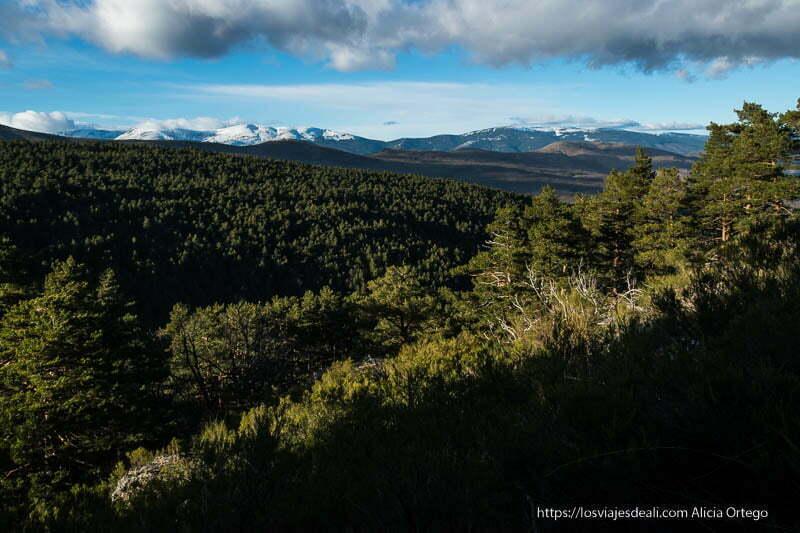 vistas de los bosques de canencia y al fondo montañas nevadas