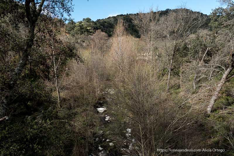 río con mucha vegetación y árboles y el perfil de una montaña al fondo