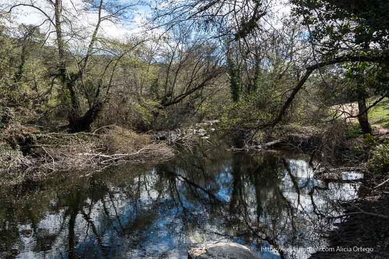 rio guadalix con reflejos de árboles y muchas ramas caídas después del invierno