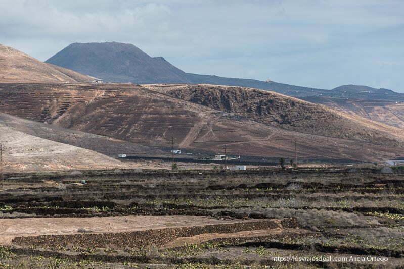 paisaje que rodea al Jardín de cactus de Lanzarote con cultivos de tuna y volcanes al fondo