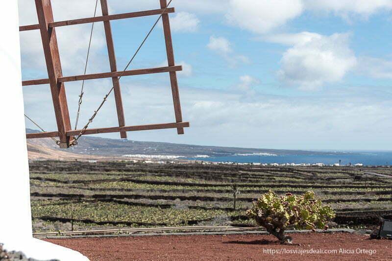 paisaje desde el molino con el mar al fondo y cultivos de cochinilla demarcados con vallas de piedra