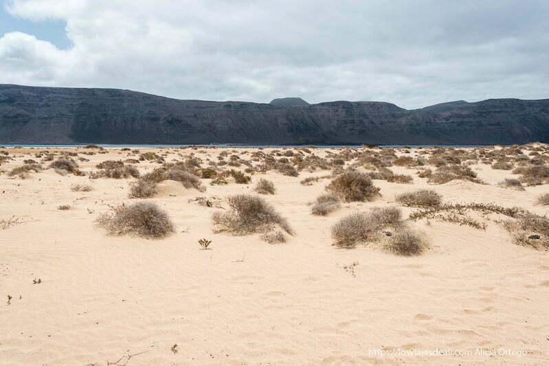 playa de arena dorada con matorrales secos y los riscos de Famara ocupando todo el horizonte con color negro de lava