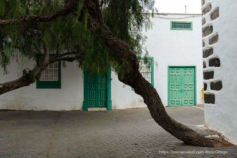 esquina de plaza con gran árbol de tipo sauce llorón y puertas verde claro al fondo