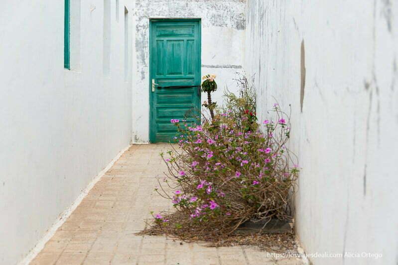 callejón con puerta verde al fondo y algunas plantas con flores creciendo junto a la pared