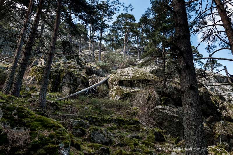 montaña llena de rocas verdes por el musgo