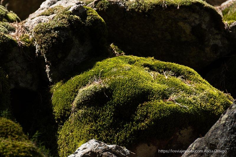 musgo verde cubriendo rocas entre sol y sombra