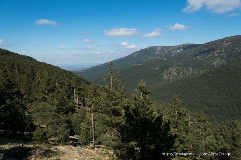 vistas de montaña cubiertas de pinares
