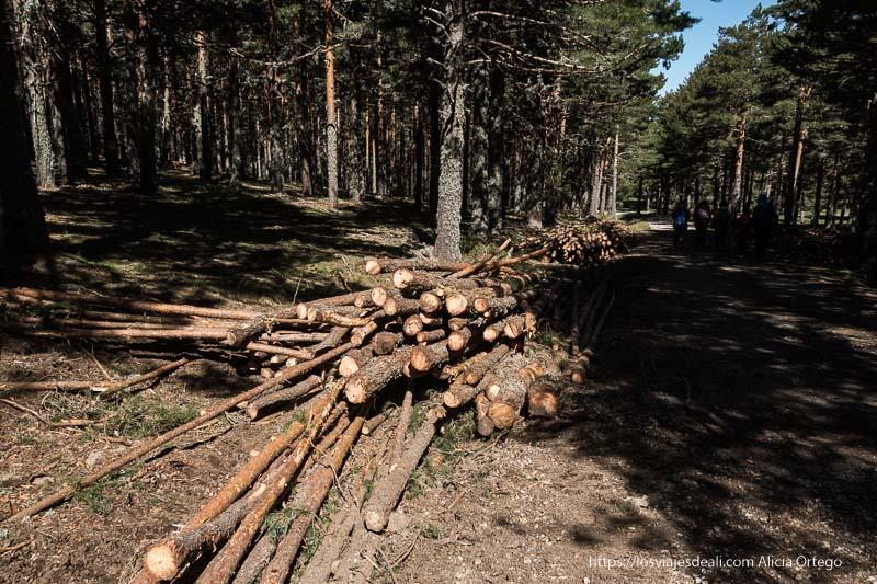 troncos de pino cortados amontonados junto al camino bajando del puerto de Navafría