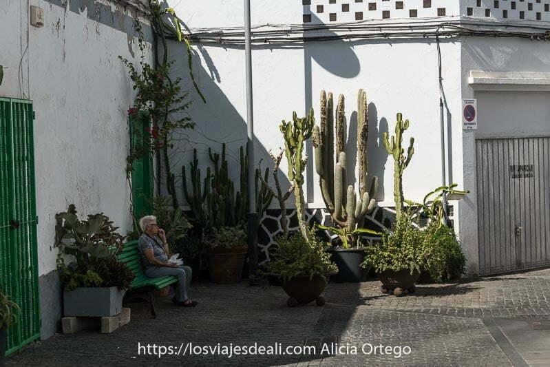 rincón con macetas con cactus y una señora sentada en un banco pintado de verde