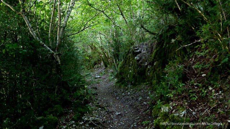 camino entre árboles y rocas llenas de musgo
