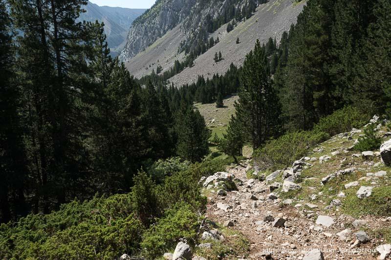camino de rocas entre pinos y arbustos y empezando a ver las montañas al fondo