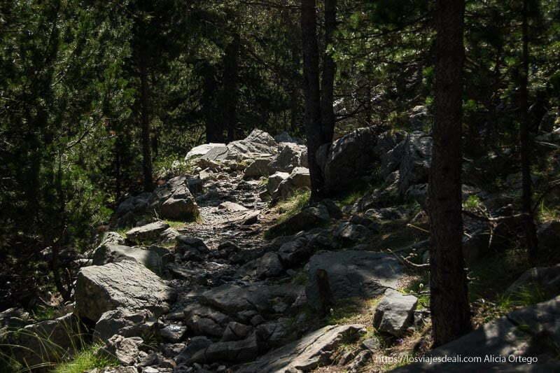 camino de rocas entre pinos