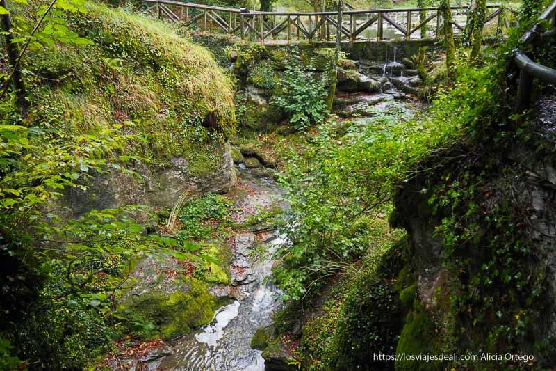 arroyo con puente de madera y mucha vegetación