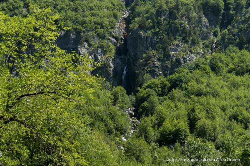 cascada vista de lejos con mucho bosque alrededor