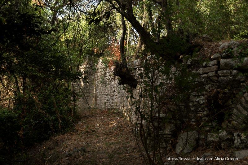 murallas con árboles cuyas raíces salen de entre las piedras