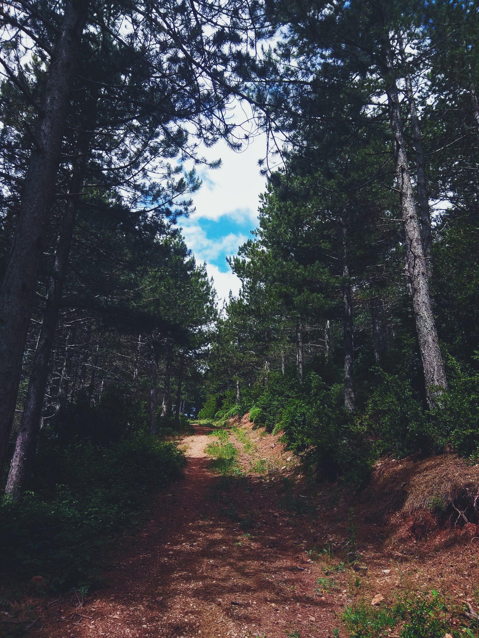 Ruta al Pico Puchilibro