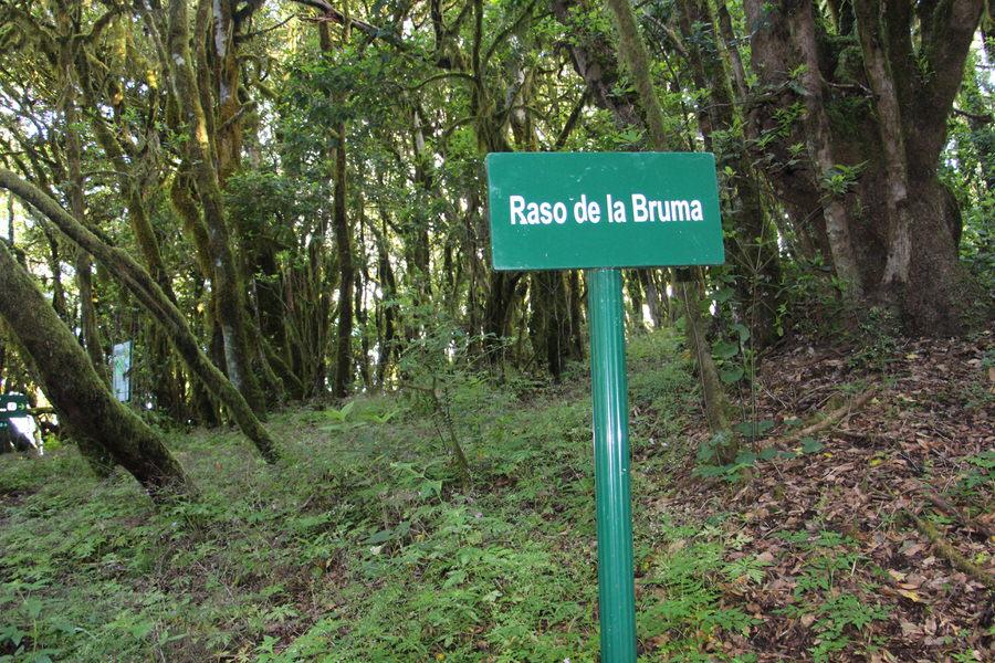 cARTEL rASO DE LA bRUMA,gARAJONAY