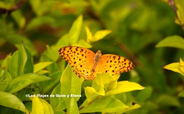 Mariposa en Cuc Phuong