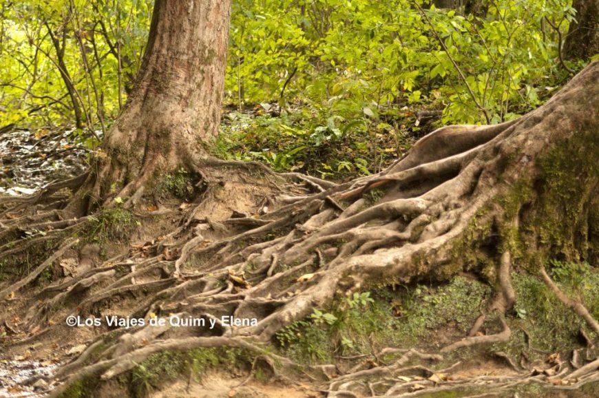 El bosque de los Lagos de Plitvice
