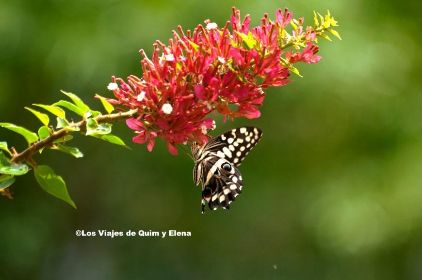 Una mariposa dentro de la ciudad