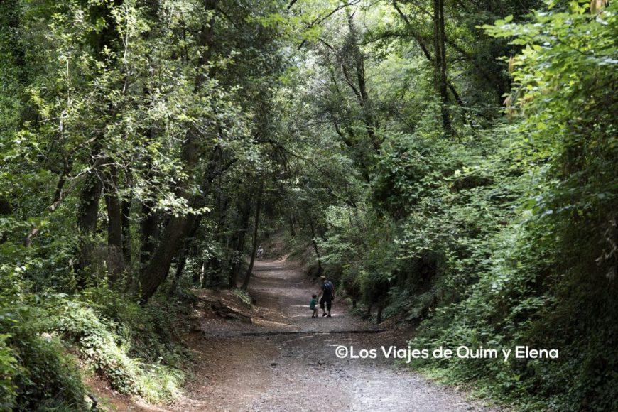 Caminando bajo los árboles, hacia el volcán