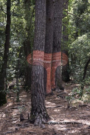 Rovelló en el Bosque pintado de Poblet