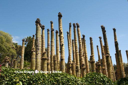 Rascacielos de cactus en Pinya de Rosa