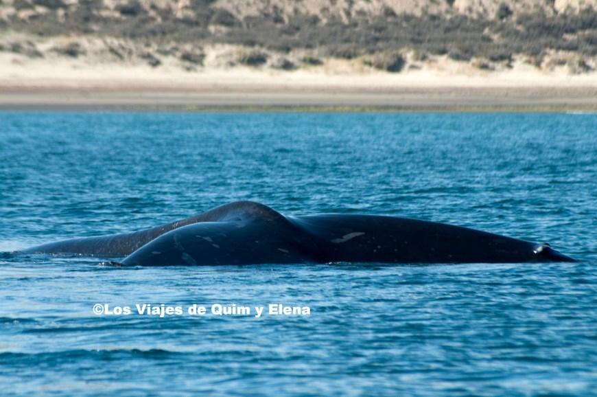 La cola de una ballena, durante el avistamiento