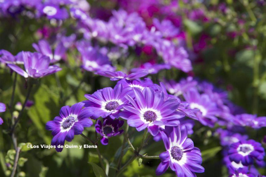 Flores en los jardines