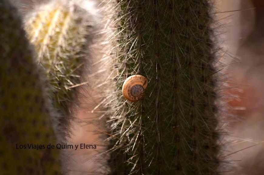 Sin miedo a los pinchos de los cactus
