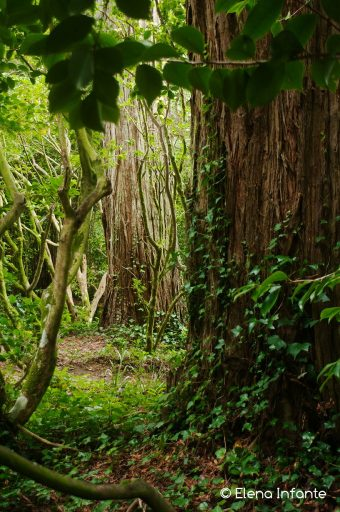 Jardines del Palacio da Pena