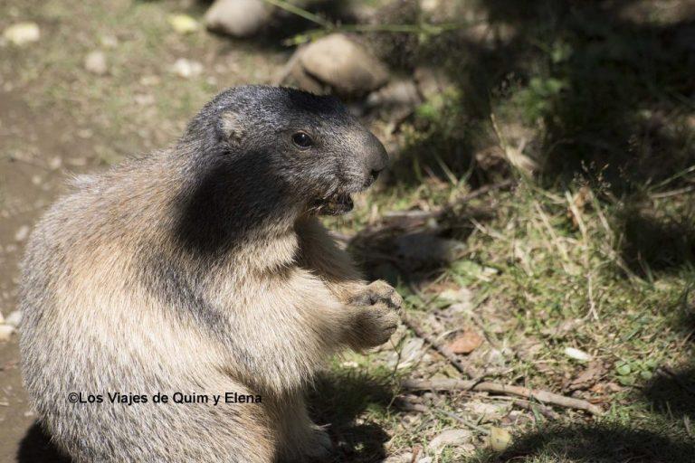 La zona de las marmotas muy animada