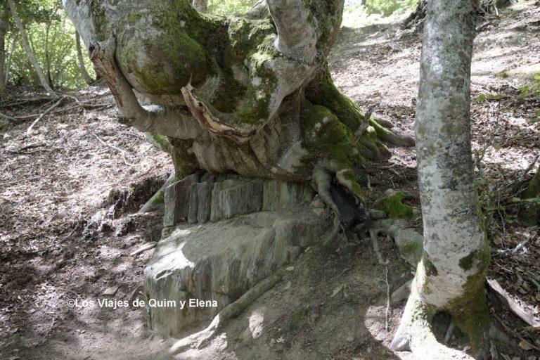 Hay que estar atento en el Bosque de Carlac