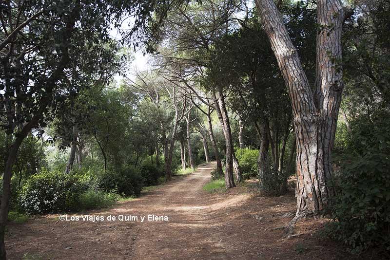 Bosque urbano del Parque de la Oreneta