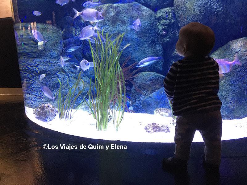 Álex alucinando con los peces de Atlantis Aquarium