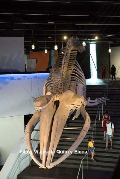 Entrada principal del Museo