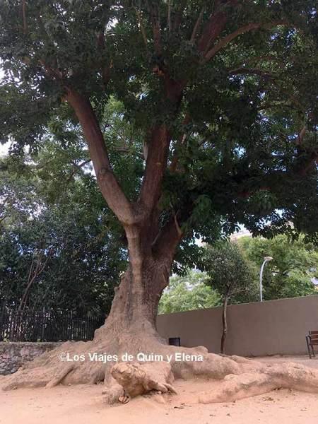 árbol en la entrada del Parc de les Aigües