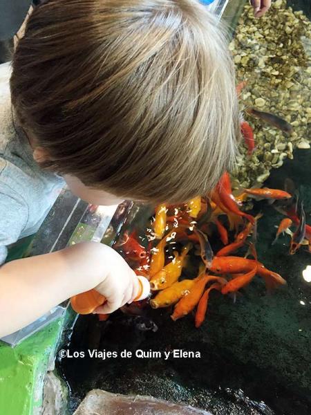 Éric dando de comer a los peces en el Aquarium