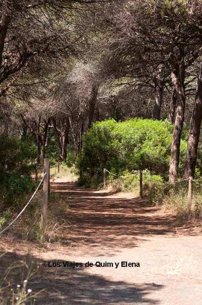 Pineda de Can Camins en el Delta de Llobregat