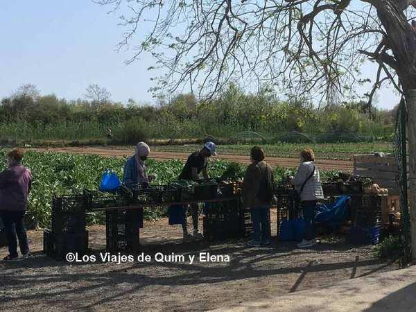 Puesto de venta en el Delta del Llobregat
