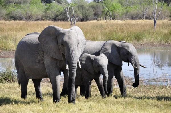 Consejos para hacer un safari en África