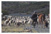 www.losvientosdelaruta40.wordpress.com