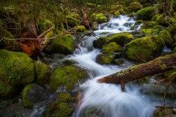 Vibrance at Opal Creek